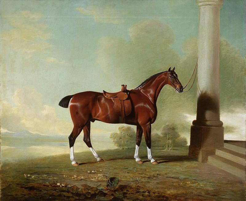 Маршалл, Бенджамин (1768-1835) -- Любимый каштановый гонтер леди Фрэнсис Стивенс. Музей искусств Филадельфии