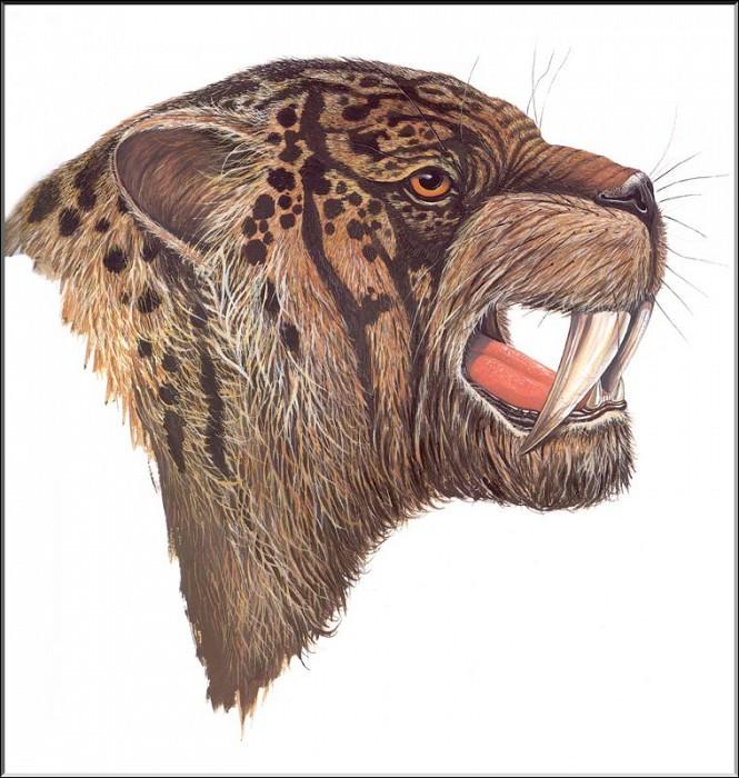 PO ExtAn 071 Meganthereon. PO_Extinct_Animals