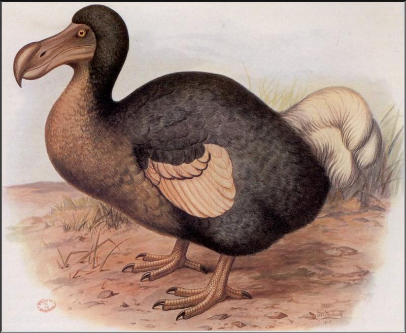 PO ExtAn 001 Dodo de lоle Maurice. PO_Extinct_Animals