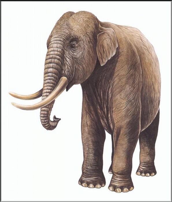 PO ExtAn 057 Elephas falconeri. PO_Extinct_Animals