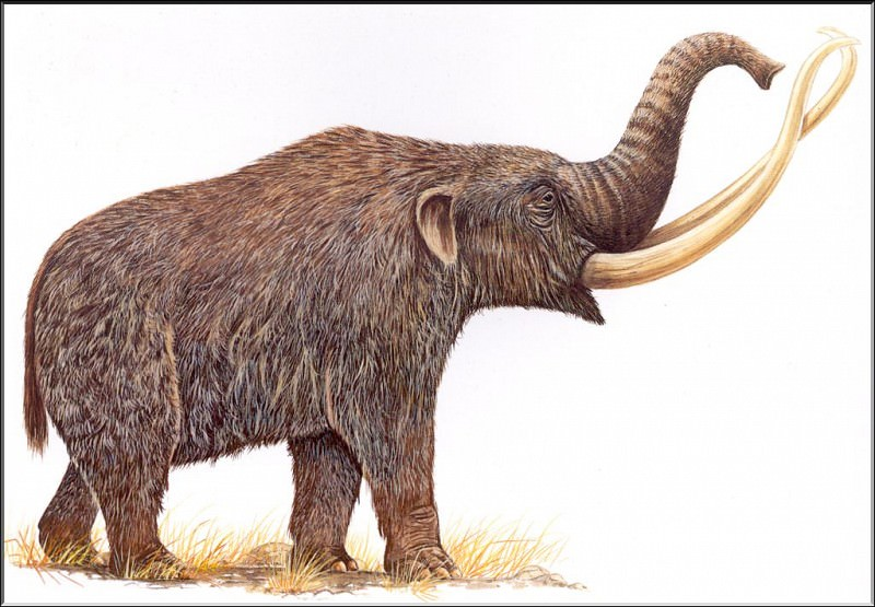PO ExtAn 107 Mammouth nord-americain. PO_Extinct_Animals