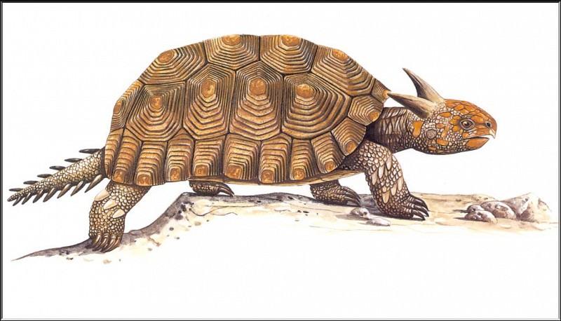 PO ExtAn 046 Meiolania. PO_Extinct_Animals