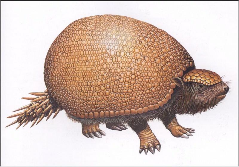 PO ExtAn 110 Glyptodon. PO_Extinct_Animals
