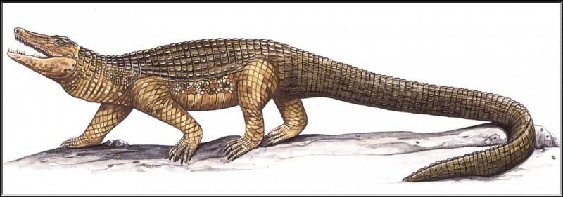 PO ExtAn 045 Mekosuchus inexpectatus. PO_Extinct_Animals