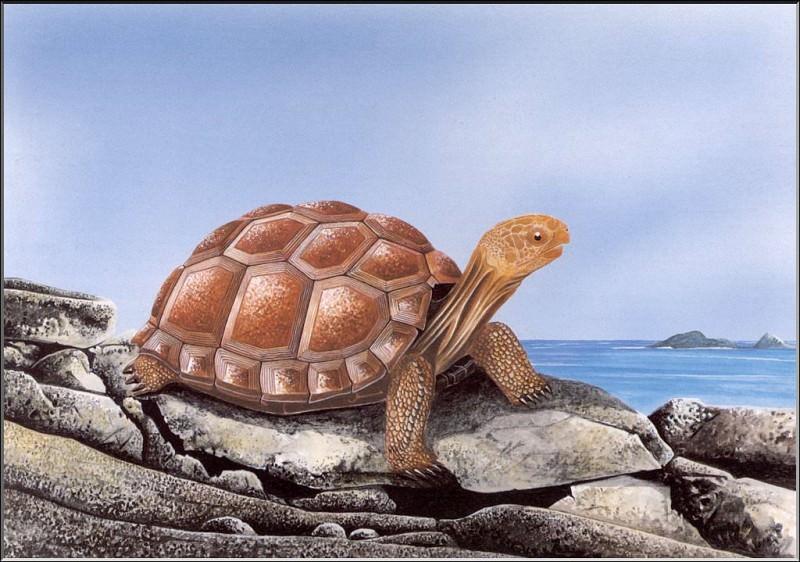 PO ExtAn 012 Dipsochelis daudini. PO_Extinct_Animals