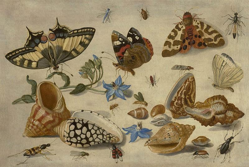 Jan van Kessel Butterflies shells & insects 99199 20. часть 3 - европейского искусства Европейская живопись