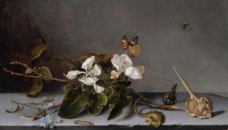 Balthasar van der Ast (1593-94-1657) - Still life with apple twig. Part 1