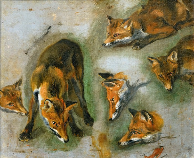 Pieter Boel (1622-1674) -- Views of a Fox. Part 1 Louvre