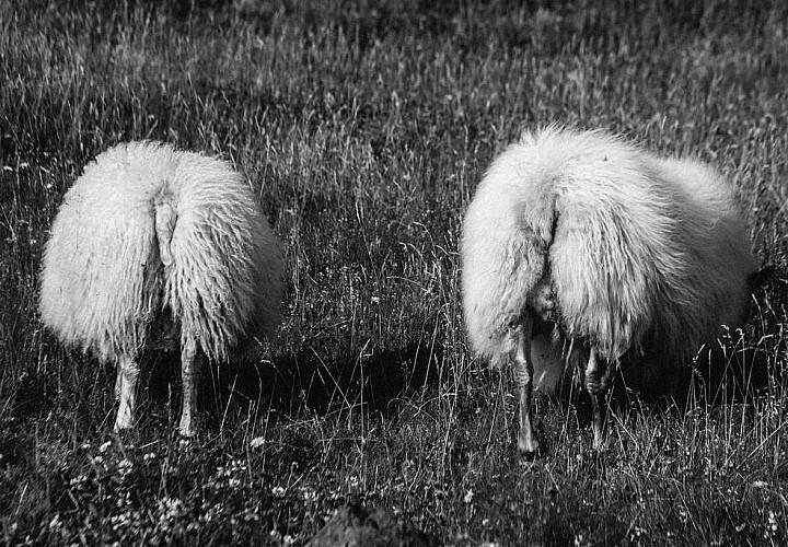 Фотовыставка Елены Богдановой «Исландия» 12+