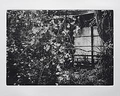 Выставка «Press&Release. Фотогравюра Питера Миллера» (США)