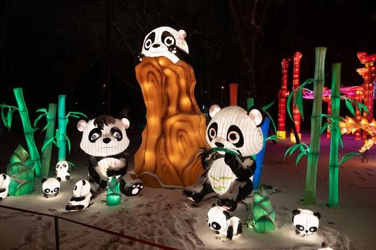 "Exposition de photos ""Pandas de Jaani dans le monde"""