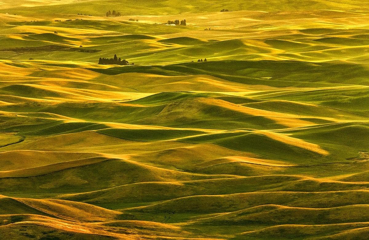 Золотой бриз. ©Надежда Найденова 2014