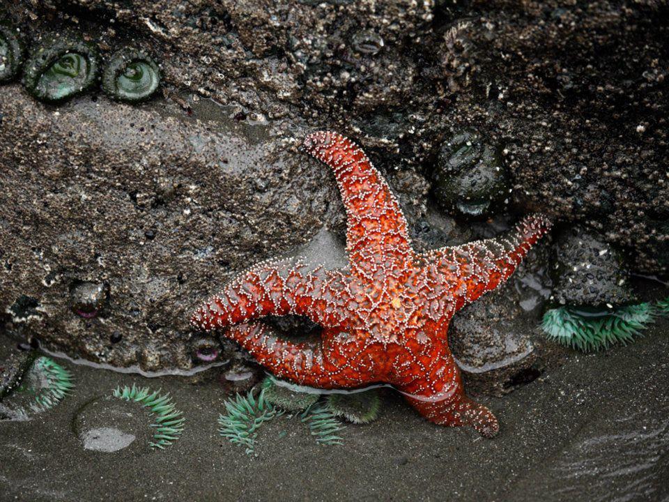 Звезда, путь в небо. ©Надежда Найденова 2013