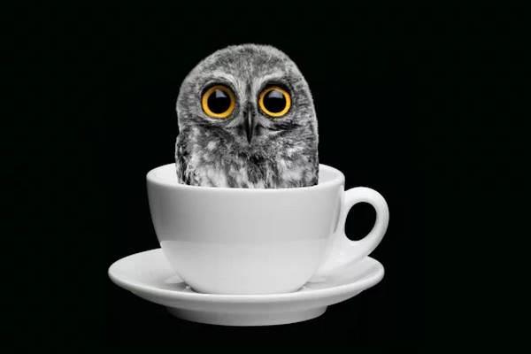 Ночь в музее «Безумное чаепитие». Галерея «На Каширке»