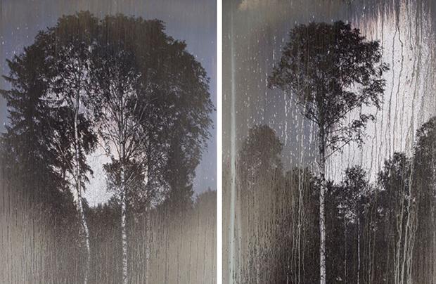 Мэттью Брандт. Таинственный лес